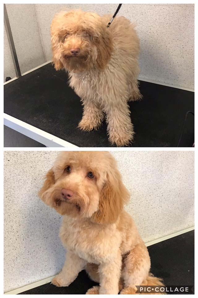 Before and after wash and groom